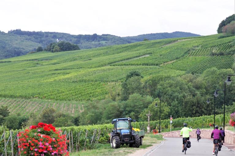Cycling in Alsace
