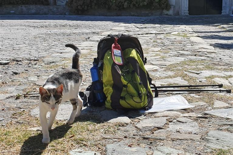 Cat next to hiker backpack