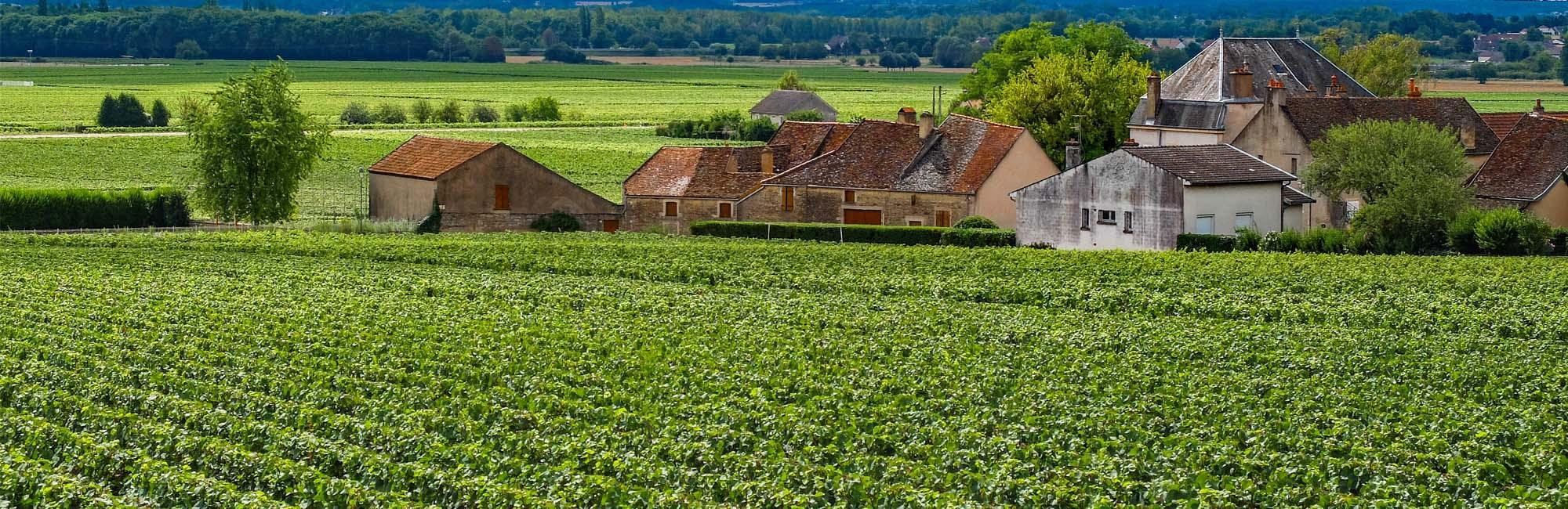 Cycling holidays in france-burgundy