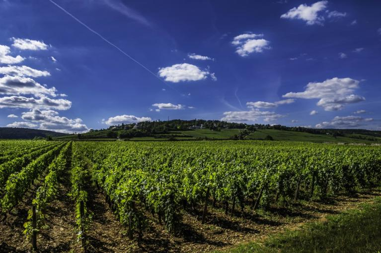 Vineyards Burgundy